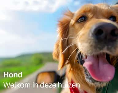 Groot vakantiehuis met hond